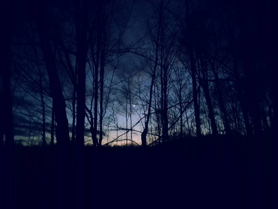 forest at night for the Moonlight Hike & Wolf Howl at Gordon's Park on Manitoulin Island