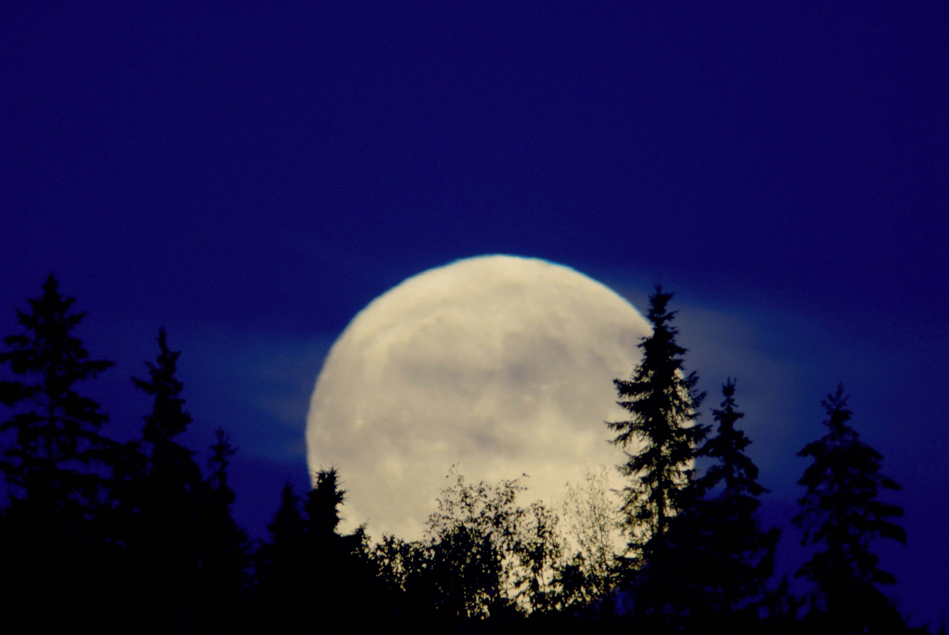 Full moon for the moonlight hike & wolf howl at Gordon's Park on Manitoulin Island