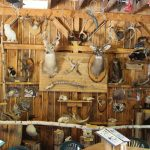 Nature Centre; Taxidermy; mounted animals; Manitoulin Island