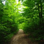hiking on manitoulin island; nature trails; nature education