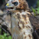 onsite activities birding Gordon's Park Manitoulin Island